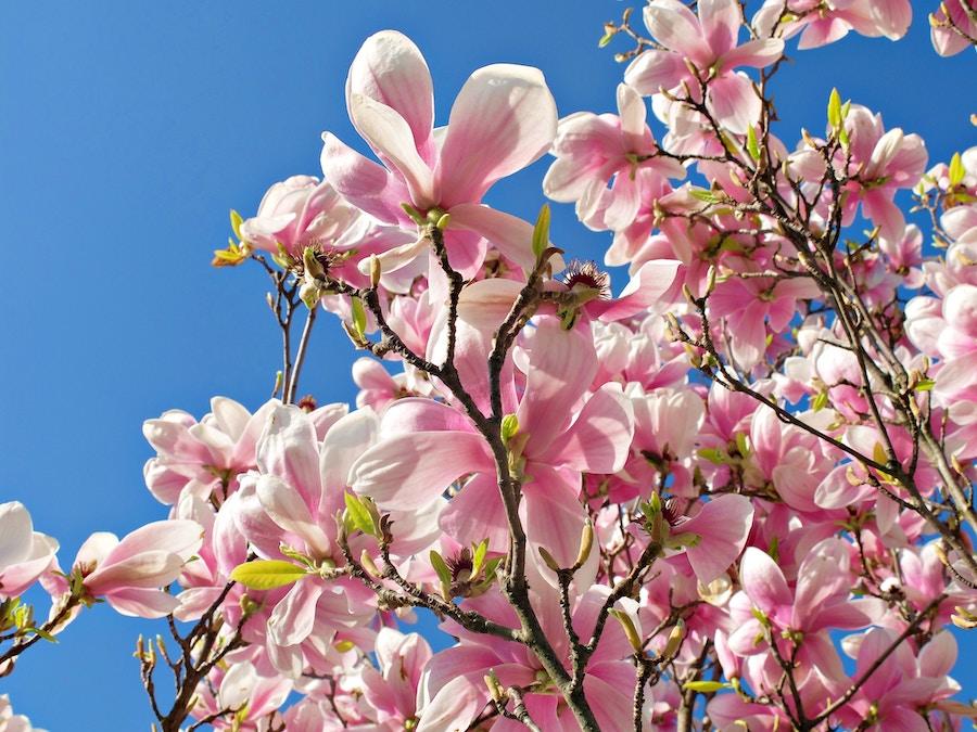 routine-printemps-bonne-mine-detox-naturactive-avis-test