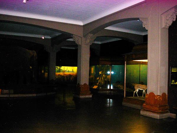 Scene-musee-histoire-naturelle-new-york-2