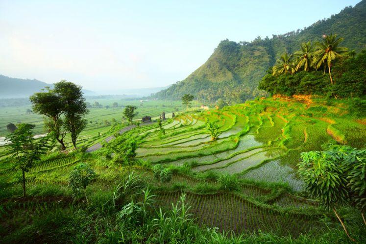 5 choses à voir absolument lors d'un voyage en Indonésie