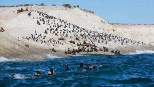 La péninsule Valdés et le safari marin