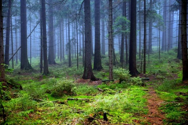Les forêts les plus anciennes de la planète