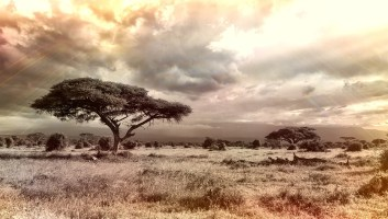 10 raisons de découvrir le continent Africain