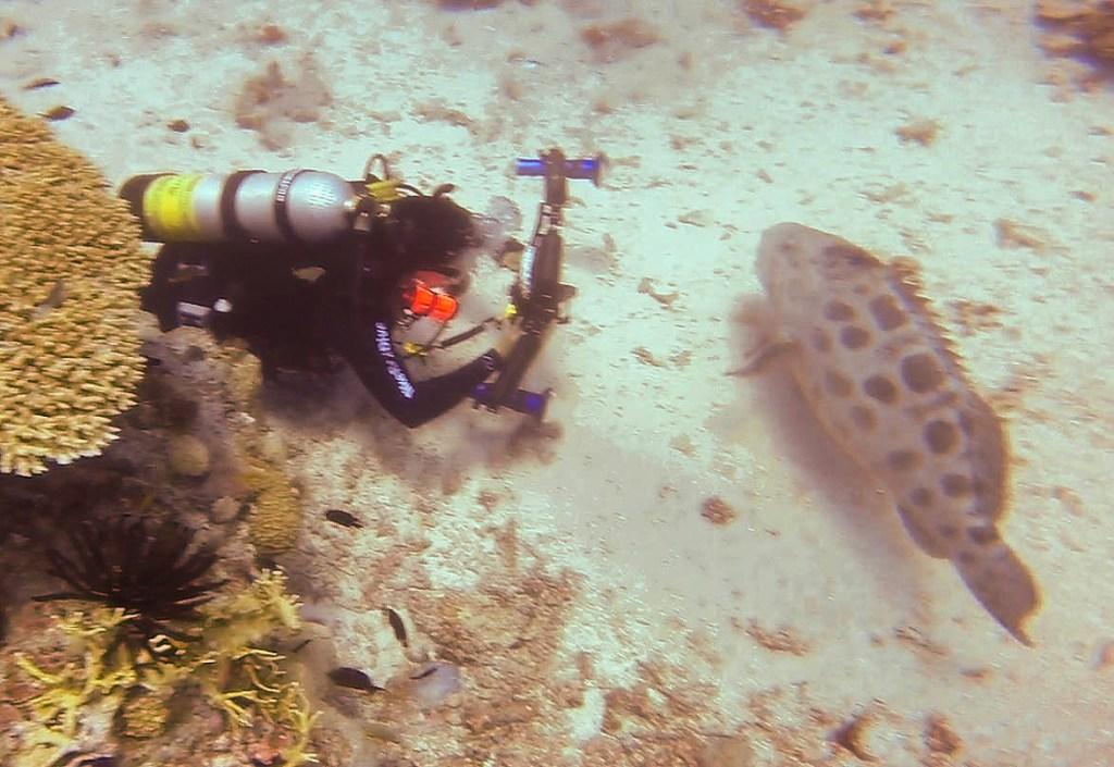 Potato Cod Hole Dive Site, Australia - Taken by Diann Corbett, 09/2015