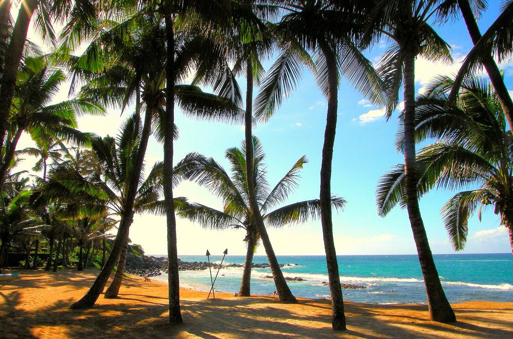 Palm Trees, Maui, Taken by Diann Corbett, 09/2009.
