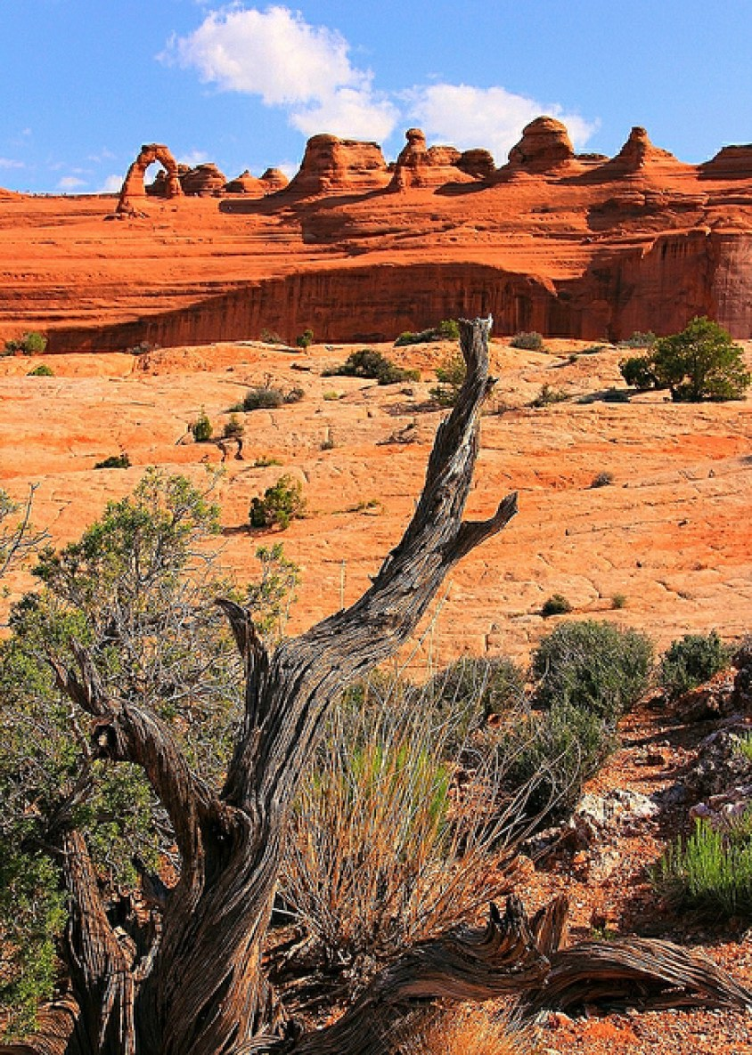 The Delicate Arch, Arches National Park, Utah - Taken by Diann Corbett, 05/2013.