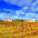 Vineyard in Languedoc, France