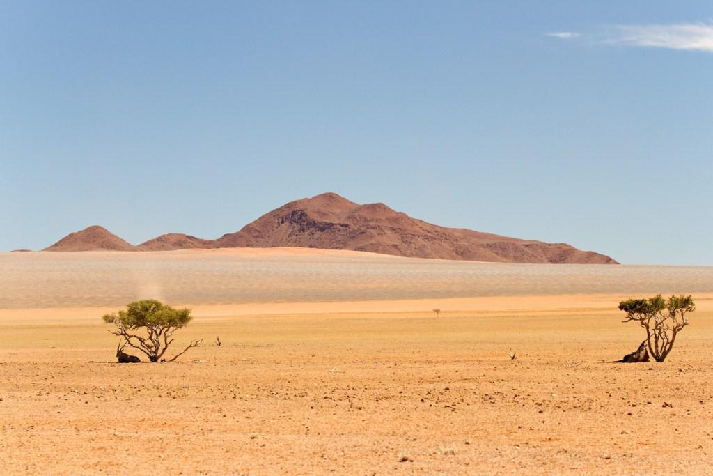 Désert Namib 5