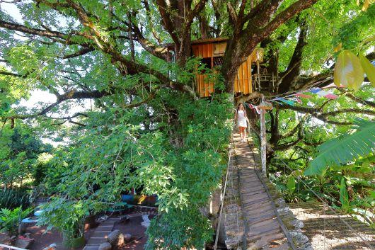 The largest Ceibo tree in the world located in San Cristobal with an amazing tree house built in it. THe tree house come fully equipped with a kitchen, bedroom, bathroom (with working toilet and shower) and a balcony.