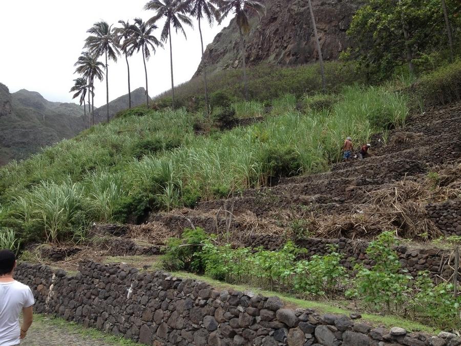 Culture en terrasses - Santo Antão, Cap-Vert