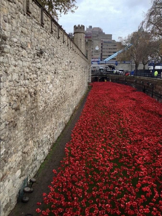 Tulipes à l'extérieur de la Tour de Londres - Londres, Angleterre