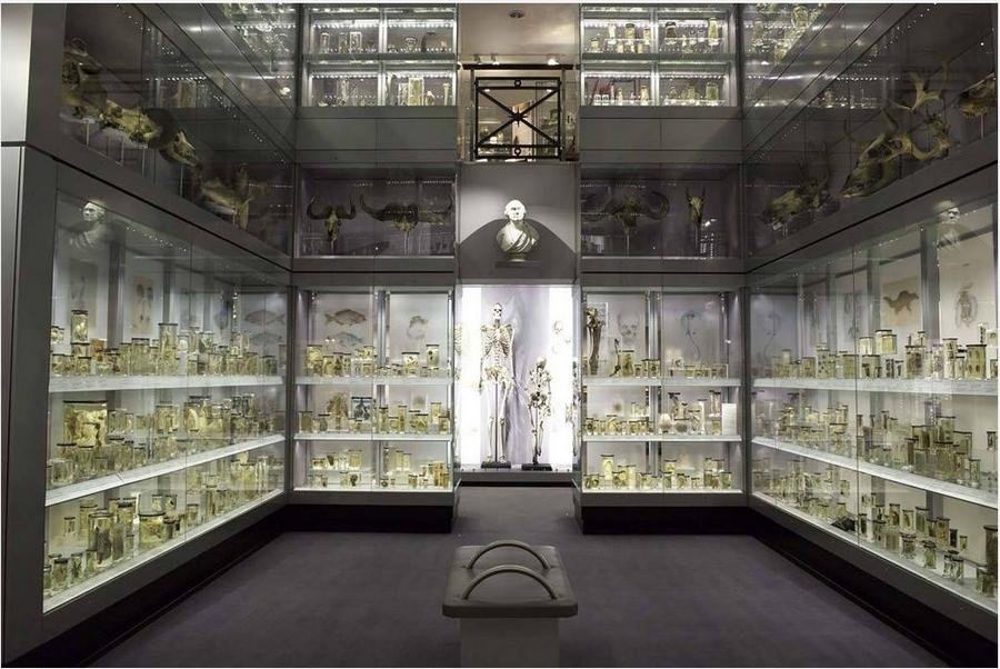Hunterian museum 1
