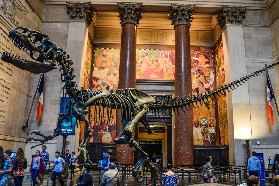 Dinosaur skeleton at the American Museum of Natural History - New York, United States