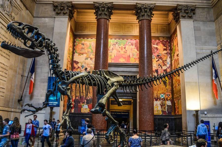 Squelette de dinosaure dans l'entrée du Muséum d'Histoire Naturelle - New York, Etats-Unis