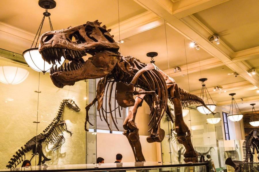 Squelette de dinosaure au Muséum d'Histoire Naturelle - New York, Etats-Unis