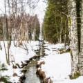 Balade dans le Parc du Jura Vaudois - Vallée de Joux, Suisse