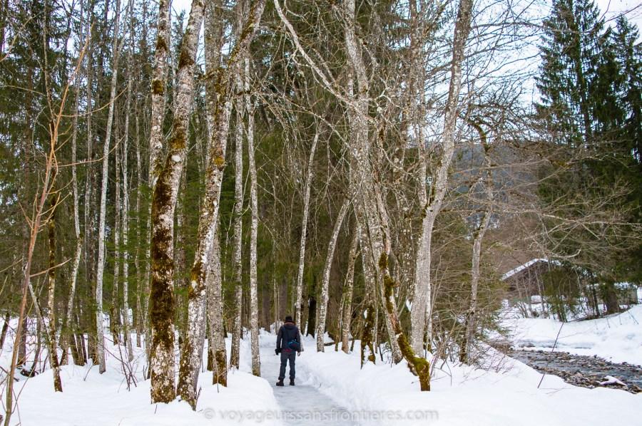 Balade sympa dans la forêt enneigée - Les Diablerets, Suisse
