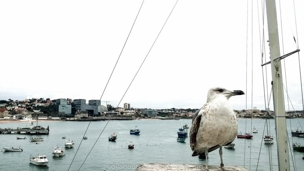 Une mouette dans le port de Cascais - Portugal