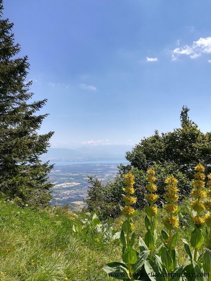 Vue sur le Mont-Blanc entre des arbres.