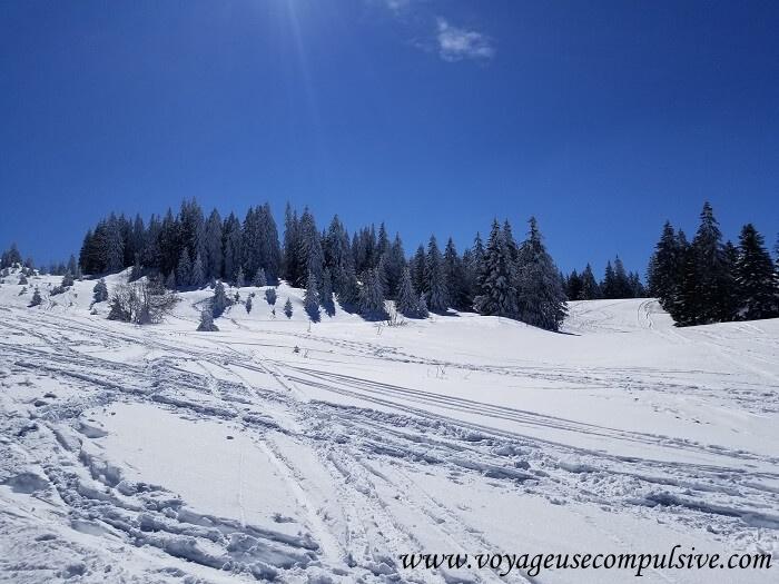 Vue sur les pistes de ski et les sapins enneigés, lors de l'ascension du Montrond dans le Pays de Gex.