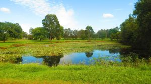 """Camping gratis en """"River Park"""", en donde el ruido de las ranas se escuchan a lo lejos."""