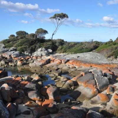 Tasmania -- VRAI Magazine