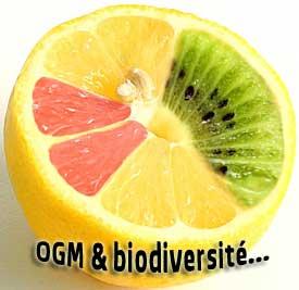 Effets des OGM sur la biodiversité
