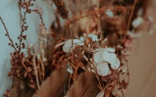duurzaam leven, foto door Flora Westbrook via Pexels