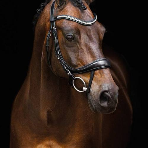 "Schockemoehle Sports Anatomic Dressage Snaffle Bridle with Bling Browband ""Equitus Beta"" - Black"