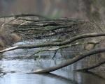 vichřice složila stromy přes strouhu