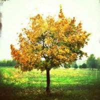 podzim-strom