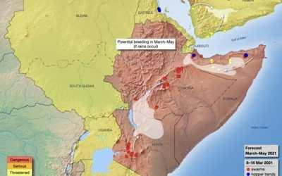 Update zur Wüstenheuschreckenplage und deren Auswirkungen für die Menschen am Horn von Afrika
