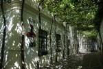 Над домами растянута гигантская сеть, на которой вольготно разрослась лоза