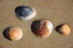 Ракушки у моря