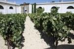 Виноград в Хересе выращивают на известняковых землях