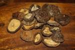 Сухие грибы шиитаки