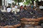 Праздник молодого вина. Фуншал. Мадейра