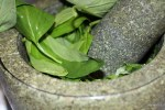 Базилик для соуса песто