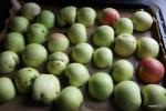 Выкладываем яблоки на противень