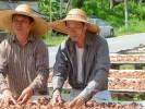 Два брата - владельцы семейной компании по производству креветочной пасты белачан, но ощупь пробуют ее качество. О-в Пинанг, Малайзия
