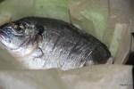 Рыбу в пергаментной бумаге готовим на пару