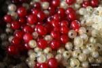 Красная и белая смородина