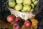 Яблоки в октябре