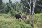 Роман двух страусов: у самца оперение темнее