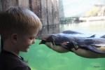 К Дане приплыли пингвины. Океанариум Кейптауна