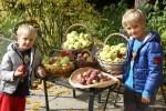 Осеннее настроение. Внуки собрали яблоки на даче