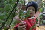 Даня собирает яблоки на даче