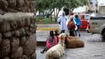 Засада на туристов: индейцы и альпаки - традиционный мотив фото в Андах. Куско