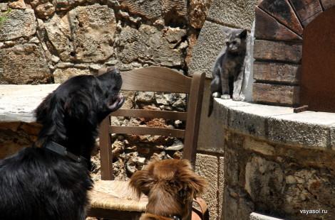 Сельская идилия: на винодельне Nostos дружат даже собаки и кошки