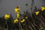Цветы на вершине вулкана Бару