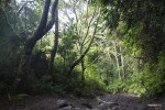 Склоны вулкана Бару покрыты джунглями